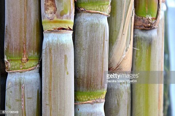 close-up of sugar canes - sugar cane stock pictures, royalty-free photos & images