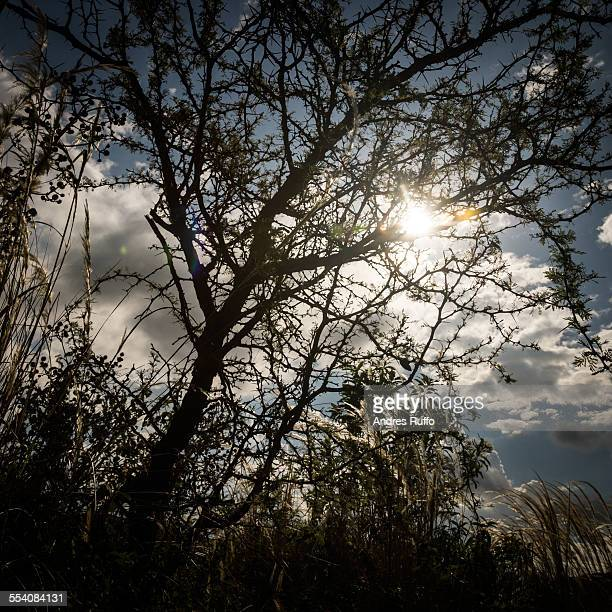 closeup of sunburst silhouettes of tree branches - andres ruffo stockfoto's en -beelden