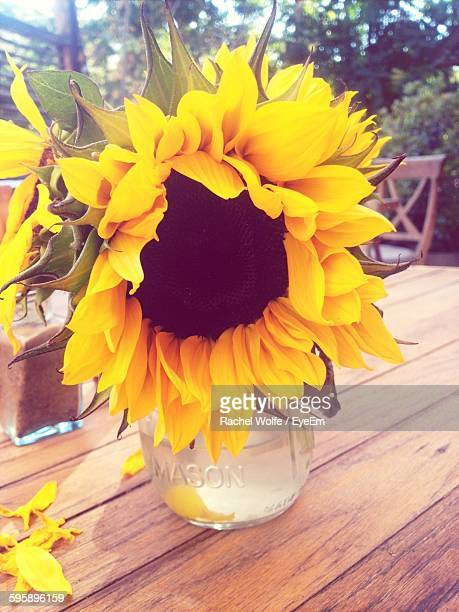 close-up of sunflower in vase on wooden table - rachel wolfe stock pictures, royalty-free photos & images