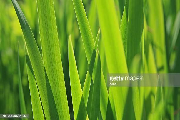 Close-up of sunlit long grass
