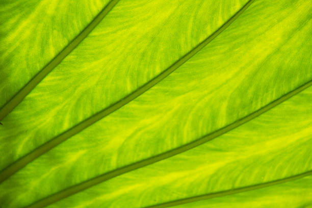 Close-up of surface of a green leaf