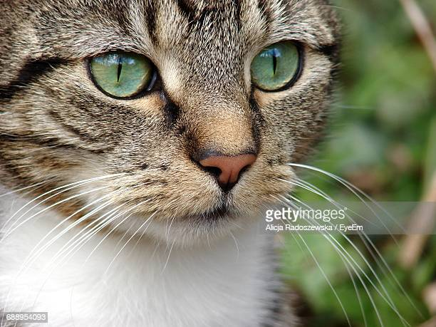 Close-Up Of Tabby Cat Looking Away