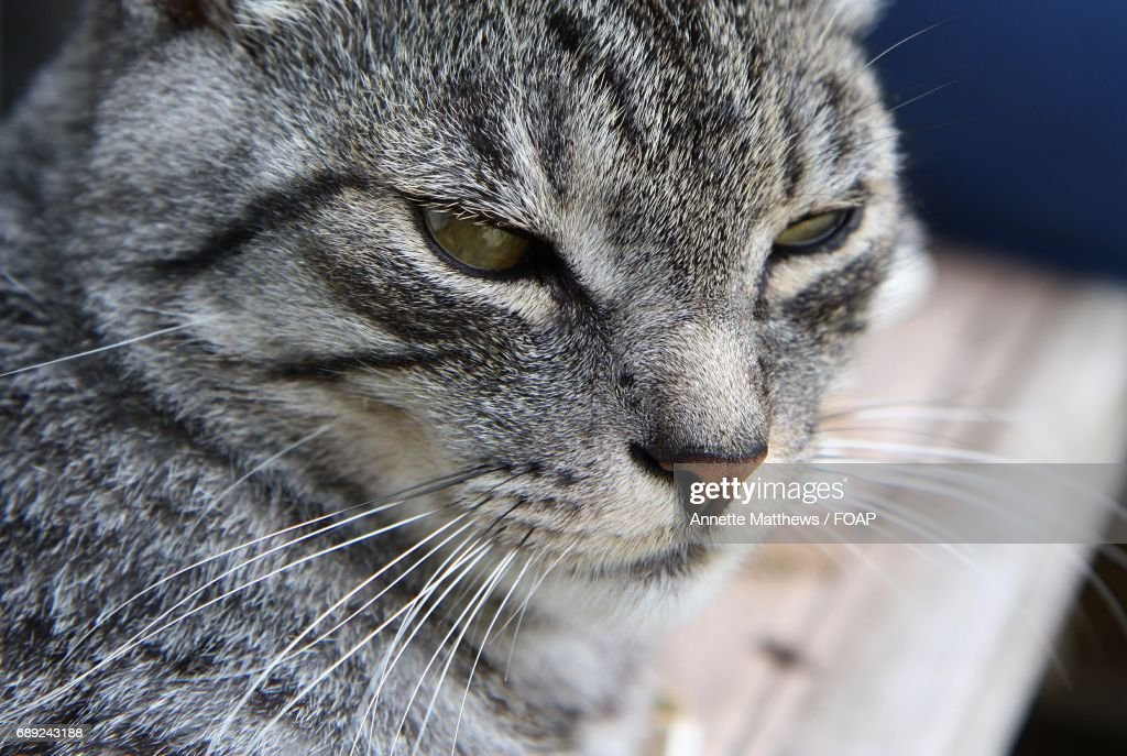 Close-up of tabby cat looking away : Stock Photo
