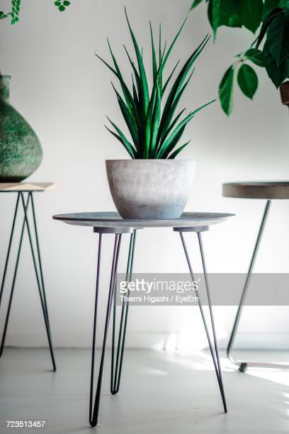 Close-Up Of Table And Potted Plants At Home