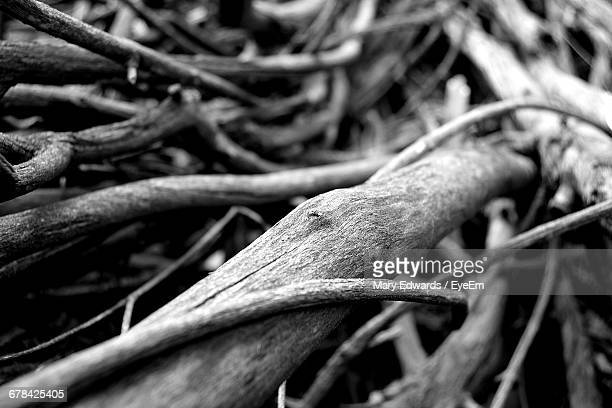 Close-Up Of Tangled Roots