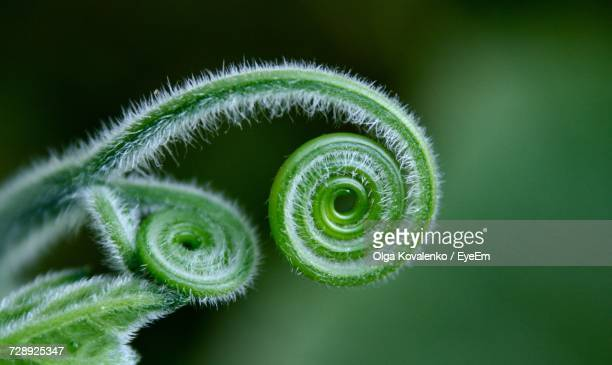 Close-Up Of Tendril