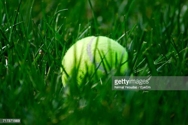 Close-Up Of Tennis Ball In Grass