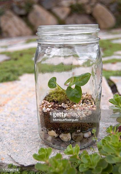 Close-up of terrarium planter grown in a glass jar