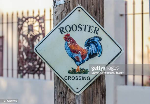 close-up of text on chucking crossing sign shape sign - steven cottingham stock-fotos und bilder