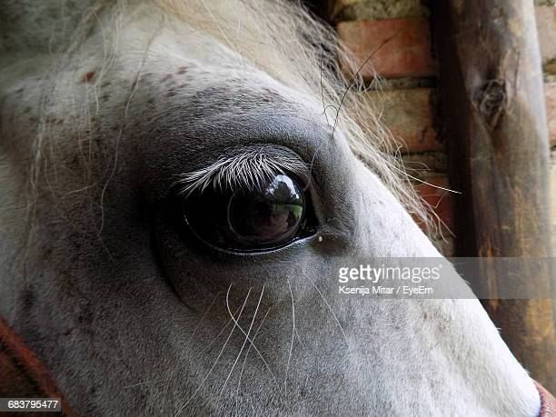 Close-Up Of The Eye Of A White Horse