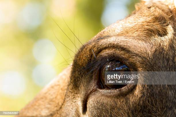 Close-Up Of The Eye Of An Animal