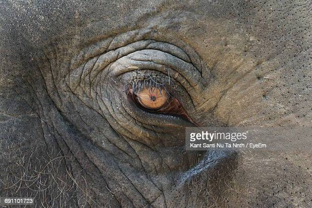 Close-Up Of The Eye Of An Elephant