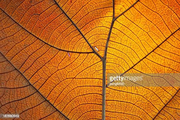 Leaf trocken.