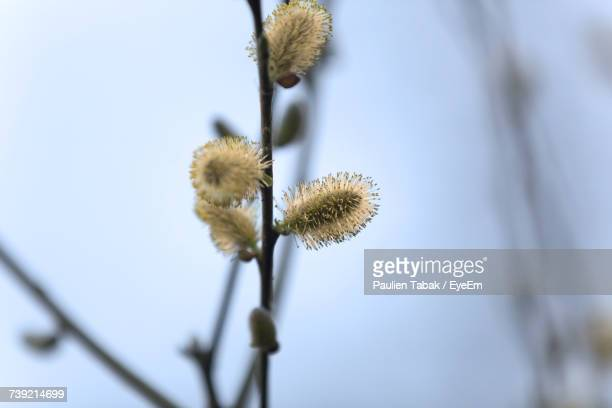 close-up of thistle against sky - paulien tabak stock pictures, royalty-free photos & images