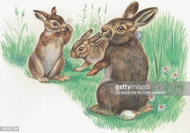 Closeup of three hares