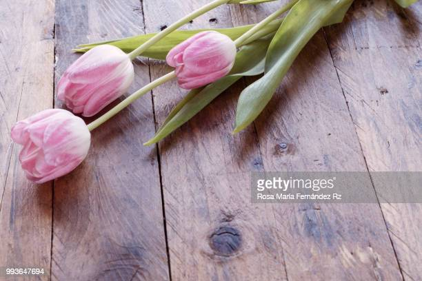 Close-up of three tulips flowers on wooden background. Selective focus and copy space.