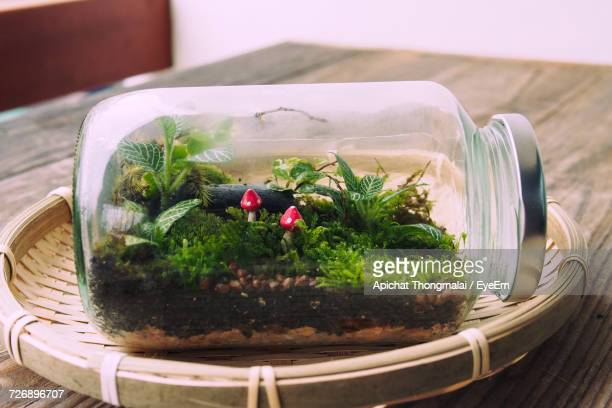 Close-Up Of Tiny Mushrooms And Plants Growing In Glass Jar