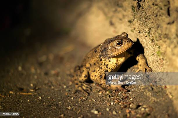Close-Up Of Toad On Dirt Field