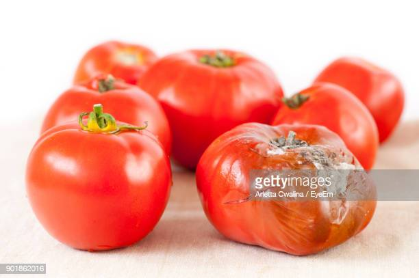 close-up of tomatoes on table against white background - rot stock pictures, royalty-free photos & images