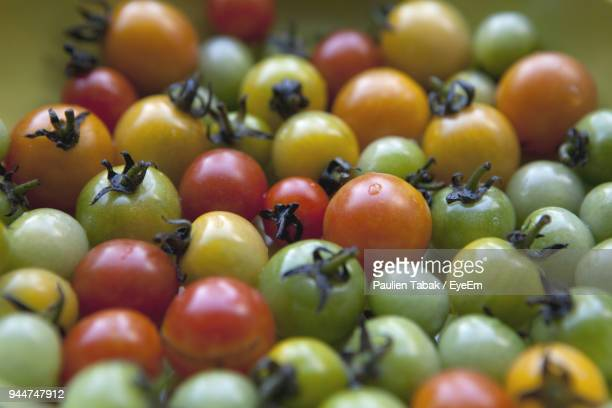 close-up of tomatoes - paulien tabak stock pictures, royalty-free photos & images