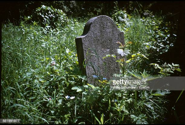 close-up of tombstone amid plants - grabmal stock-fotos und bilder