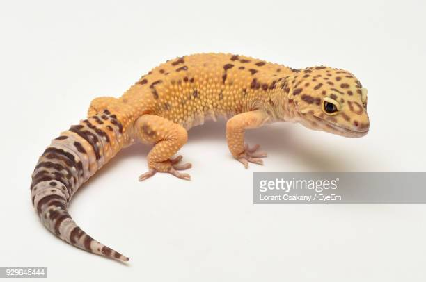 Close-Up Of Toy Lizard Against White Background