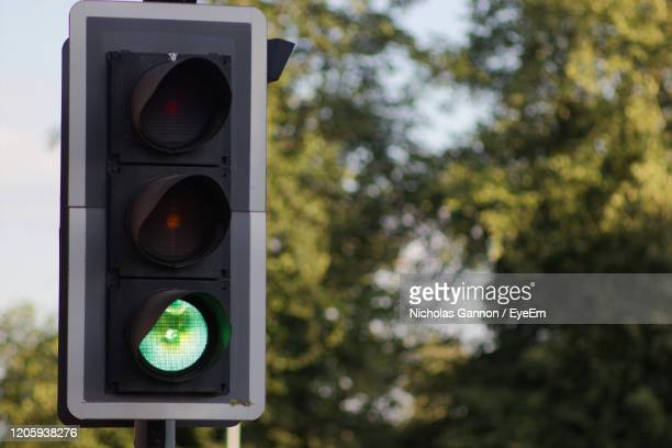 close-up of traffic light against trees - traffic light stock pictures, royalty-free photos & images