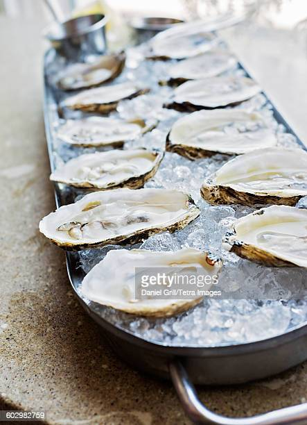 Close-up of tray with oysters
