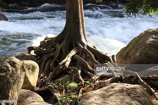 Close-Up Of Tree Against Flowing Stream