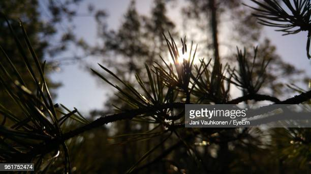 close-up of tree against sky at sunset - espoo stock pictures, royalty-free photos & images
