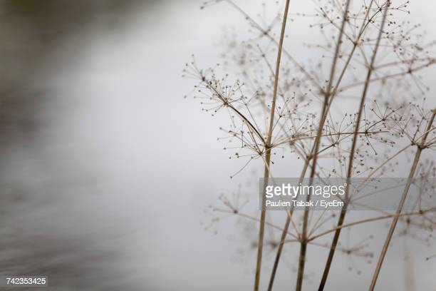 close-up of tree against sky during winter - paulien tabak stock pictures, royalty-free photos & images