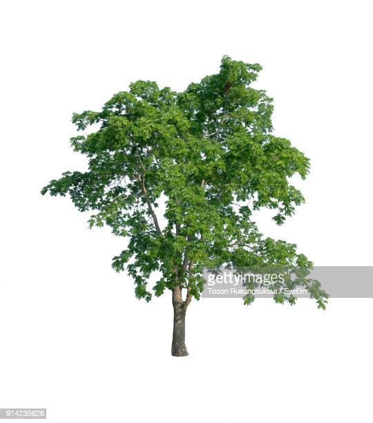 close-up of tree against white background - tree stock pictures, royalty-free photos & images