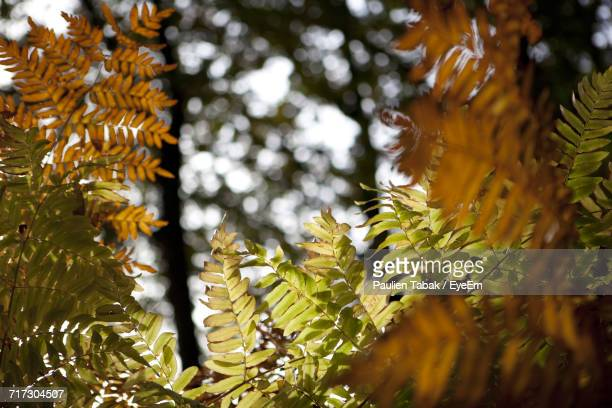close-up of tree branch during winter - paulien tabak foto e immagini stock