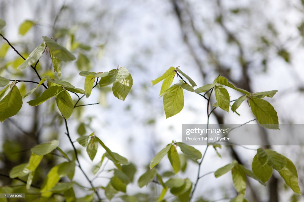 Close-Up Of Tree Branch : Stockfoto