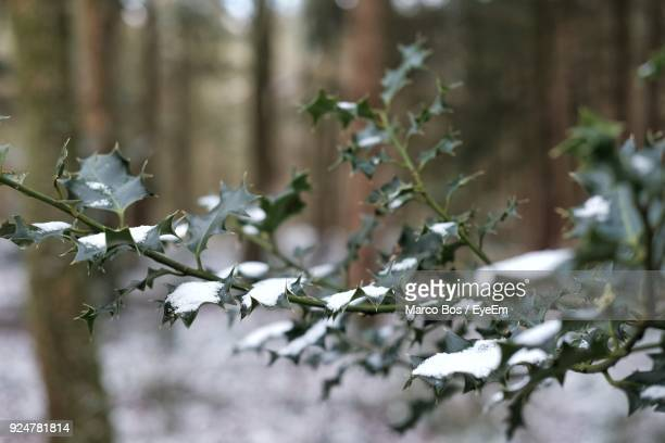close-up of tree branch - bos stock pictures, royalty-free photos & images