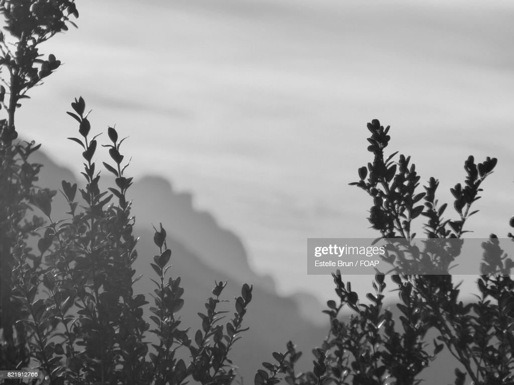 Close-up of tree branches : Stock Photo