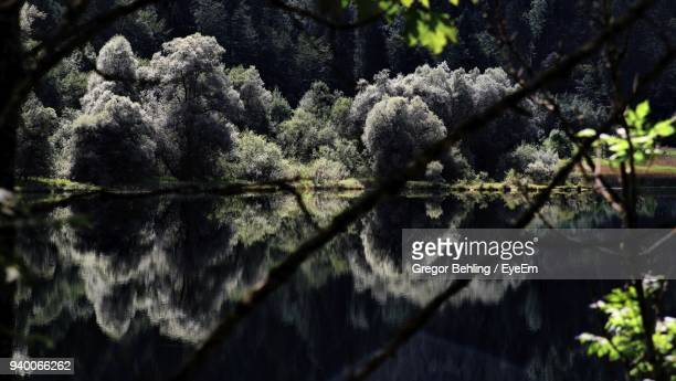 Close-Up Of Tree By Lake In Forest