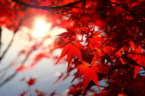 Close-Up Of Tree During Autumn - gettyimageskorea