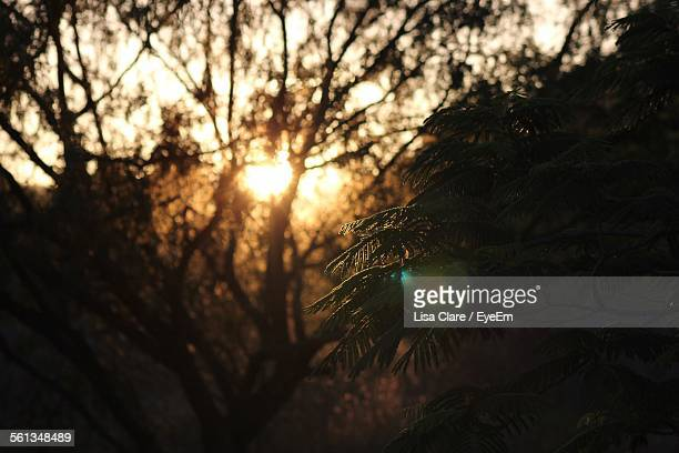 Close-Up Of Tree Growing In Forest During Sunset