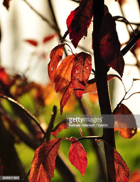 close-up of tree growing outdoors - nathalie pellenkoft stock pictures, royalty-free photos & images