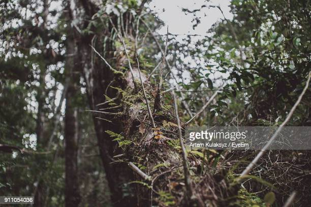 close-up of tree in forest - tree with thorns on trunk stock photos and pictures