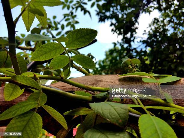 close-up of  tree - chandigarh stock pictures, royalty-free photos & images