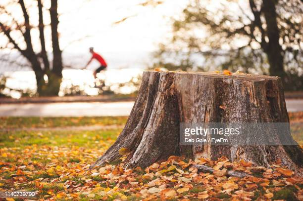close-up of tree stump in forest - tree stump stock pictures, royalty-free photos & images