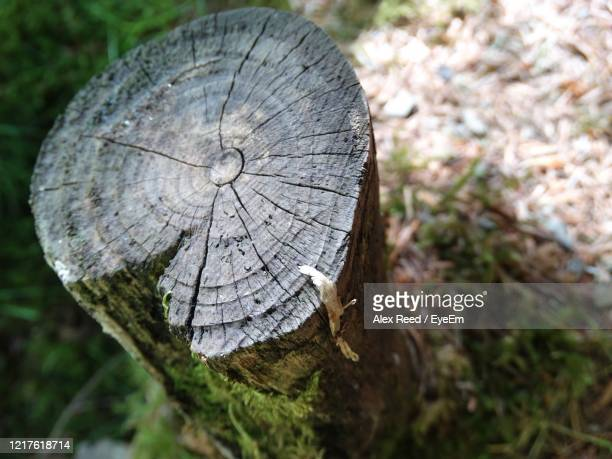 close-up of tree stump in forest - alex reed stock pictures, royalty-free photos & images