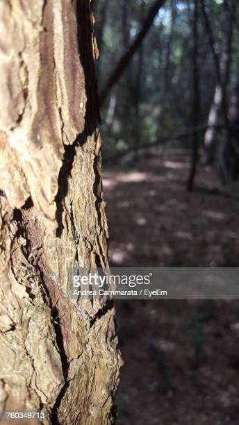 close-up of tree stump in forest - cammarata stock photos and pictures