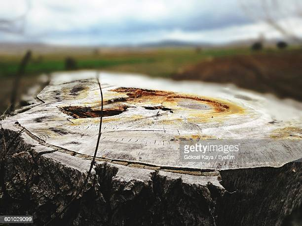 Close-Up Of Tree Stump On Field Against Sky