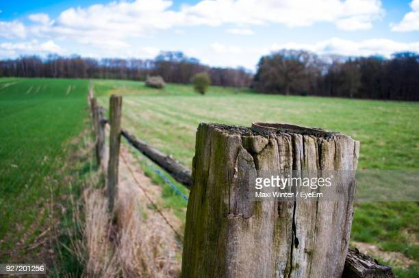 close-up of tree stump on field against sky - tree stump stock pictures, royalty-free photos & images