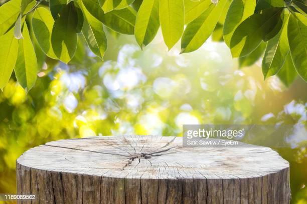 close-up of tree stump on wooden fence - tree stump stock pictures, royalty-free photos & images