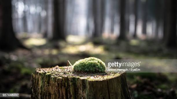 close-up of tree stump - tree stump stock pictures, royalty-free photos & images