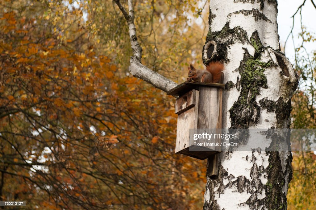 Close-Up Of Tree Trunk During Autumn : Stock Photo